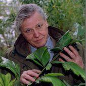 Seltene Schnecke nach Naturforscher benannt