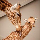 Küsschen von der Mama