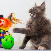 Tierischer Faschingsnarr spielt Clown