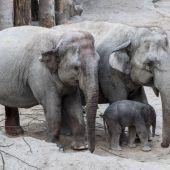 Elefantenbaby im Zürcher Zoo geboren