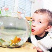Tierkommunikation ist nicht für die Fische
