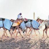 Kamele donnern über den Sand