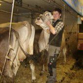 Der Zivildiener und das liebe Vieh