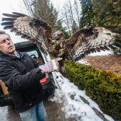 Lebensretter der großen Vögel