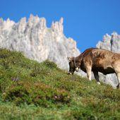 Ökoland-Pflicht gilt auch für Alpen