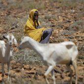 Dürre im Osten Afrikas wird zur Katastrophe