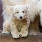 Rätsel um plötzlichen Tod von Eisbär Fritz