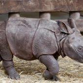 Zoo in Pilsen hat neuen Publikumsliebling