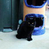 Tiere suchen neues Zuhause