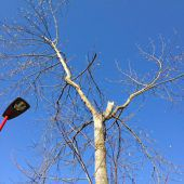 Postauto kracht gegen Baum