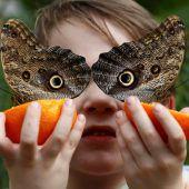 Schmetterlingsmaske