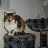 13 Katzen suchen nach Delogierung neues Zuhause