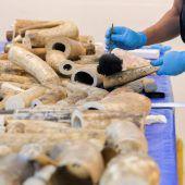 Über 400 Stoßzähne vom Zoll beschlagnahmt