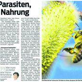 Analyse zum Bienensterben