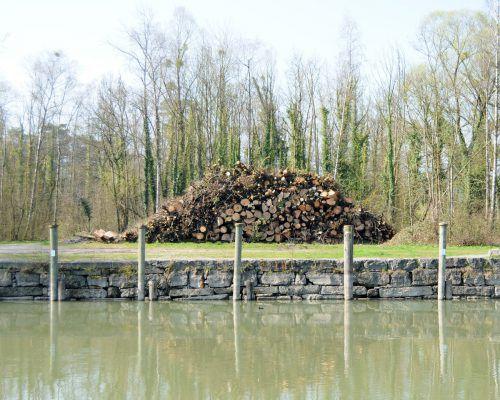 Auch auf Schweizer Seite werden befallene Eschen gefällt.