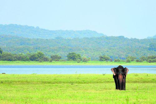 Bei Untersuchungen in Uganda haben Wissenschaftler festgestellt, dass auch die Fußabdrücke der Elefanten neue Lebensräume schaffen.