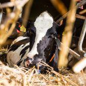 Land reagiert bei Tierschutz