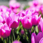 Schnittblumen sorgen für Frühlingsstimmung