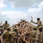 Große Rettungsaktion für Afrikas Nashörner