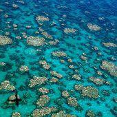 Neue Schäden am Great Barrier Reef bedenklich