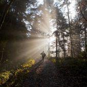 Bezirksförster fürchten um Zukunft ihrer Wälder