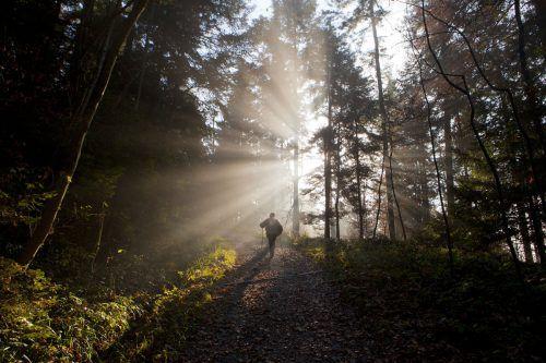 Eine langsamere Form wäre die Speicherung in Biomasse, zum Beispiel Aufforstungsprogramme mit schnell wachsenden Bäumen.