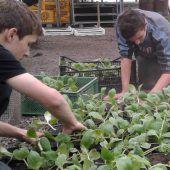 BSBZ-Schüler ziehen eigene Jungpflanzen