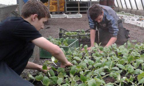 Ein Schüler bei der Arbeit mit den Jungpflanzen. Foto: BSBZ