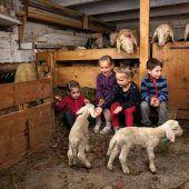 Ein munterer Nachwuchs im Schafstall