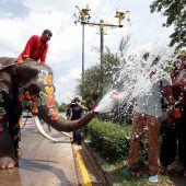 Neujahrsfest in Thailand: Elefanten duschen Spaziergänger