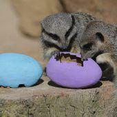 Ostern im Londoner Zoo