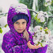 Der Schnee schmückt die Kirschblüten von Fraxern