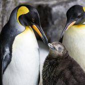 Behütet von zwei Pinguin-Damen