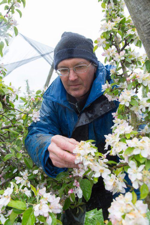 Jens Blum in Winterkluft Ende April. Die Natur meint es heuer mit ihm und den Kollegen nicht gut. Foto: VN/HOfmeister