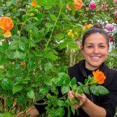 Ein Gartenparadies aus Rosen