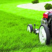 Welcher Rasenmäher ist denn der richtige?
