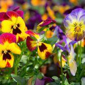 Der Frühling lockt die Menschen in die Natur