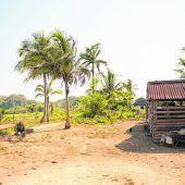 Tabakanbau und Pferde im ländlichen Viñales