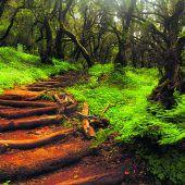Garajonay-Nationalpark: Mystischer Lorbeerwald