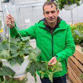 Gemüse im eigenen Garten anbauen