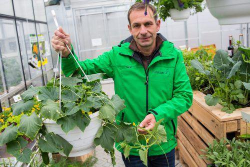 Andreas Dür weiß genau, wie man sich einen schönen Gemüsegarten zaubert. Foto: VN/Hartinger