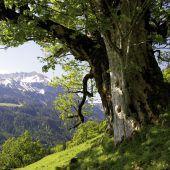 Naturfotograf Amber zeigt Baumwelten