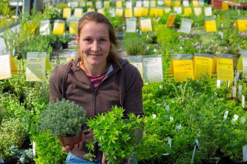 Bei Ursula Kopf gedeihen 350 verschiedene Kräuter. Zu jeder Pflanze gibt es eine Beschreibung.  Foto: VN/Paulitsch