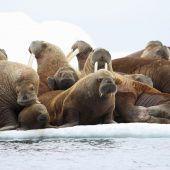 Klimawandel bedroht Alaskas Ureinwohner