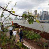 Ein Gemüsegarten im Hafen von New York