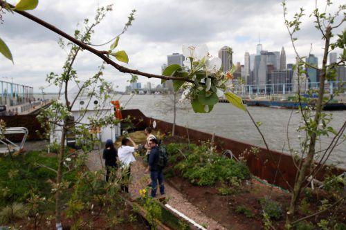 """Der Lastkahn """"Swale"""", der in New York ankert, transportiert einen ganzen Gemüse- und Obstgarten.  Foto: Reuters"""