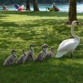 Am Paspelssee Vögel füttern wird bestraft