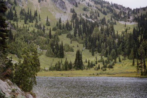 Die USA erwägen, den Baum auf die Liste der bedrohten oder gefährdeten Spezies zu setzen. Foto: AP