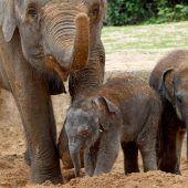 Hannover hat ein neues Elefantenbaby