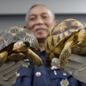 330 seltene Schildkröten im Frachtraum